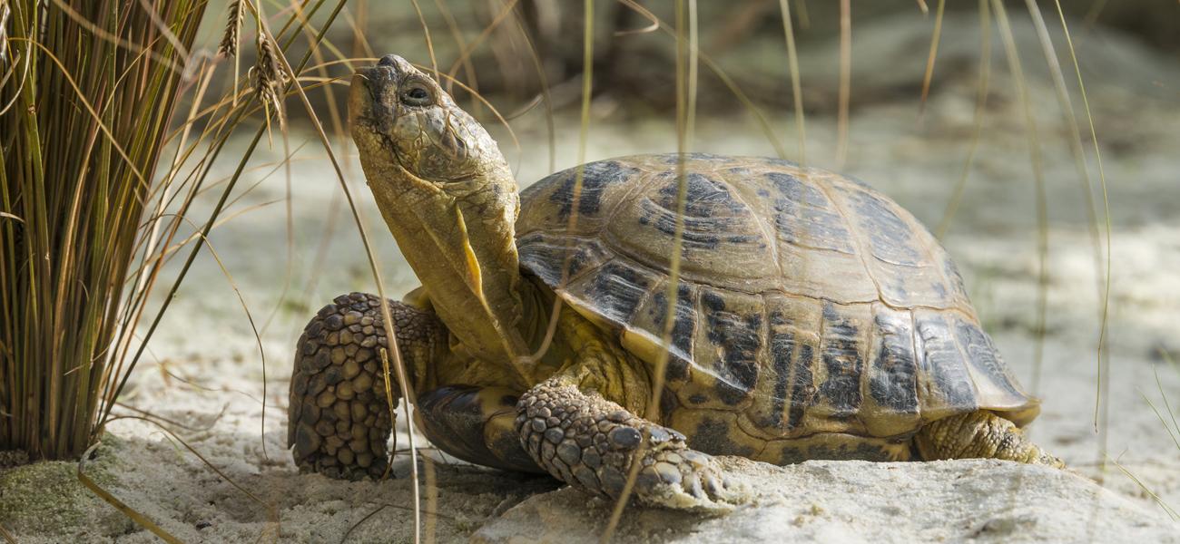 Avoir une tortue d 39 eau conseils pour s 39 en occuper ooreka for Avoir une tortue a la maison